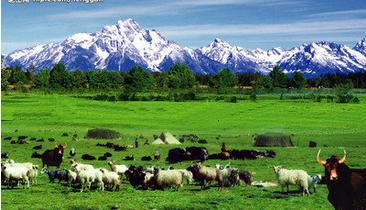 宁夏41家牛羊肉企业承诺:决不产销问题牛羊肉