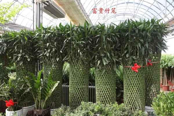 花卉绿植长期租赁租摆
