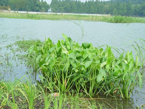 河源生态修复工程_哪儿有专业的生态修复工程