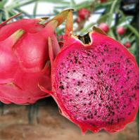 農作物銷售公司_買農作物種子就到聚鑫源農作物種植專業