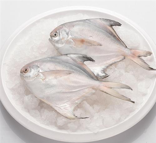 鲳鱼 万斛食品(图) 冷冻雪花鲳鱼