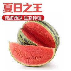 基地直发新鲜水果西瓜 甜王瓜生态有机大西瓜甘甜多汁供应批发