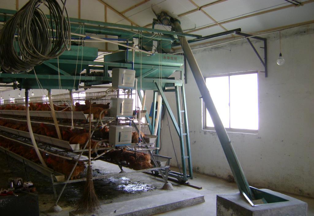 供应优质养殖自动喂料机-鸡场喂料机-肉蛋鸡喂料机在丰华机械