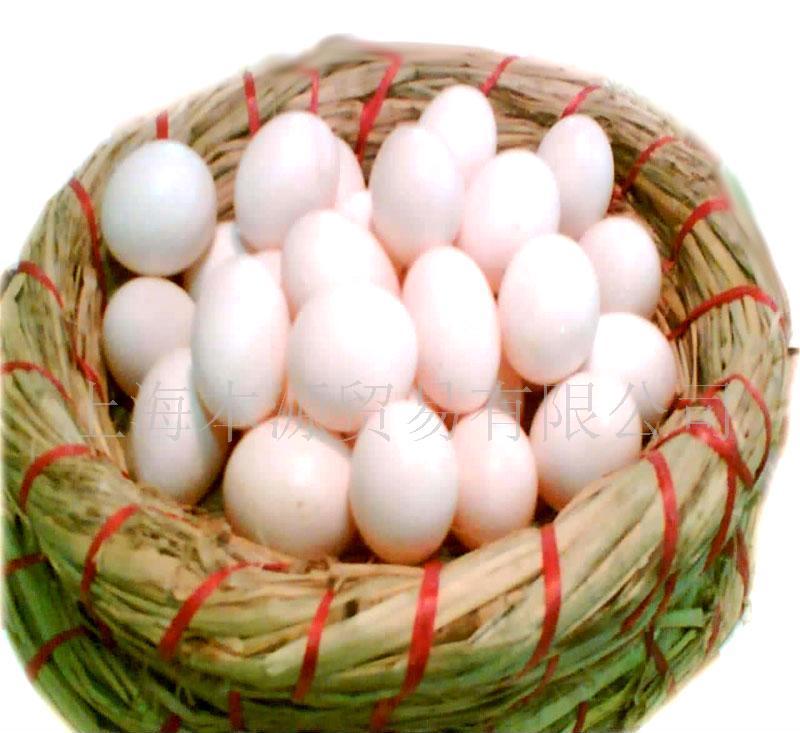 批发供应新鲜鸽子蛋 批发鸽子蛋