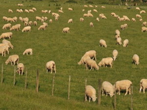 质量好的隆盛无公害散养猪牛羊鸡隆盛养殖基地供应,物超所值的散养猪