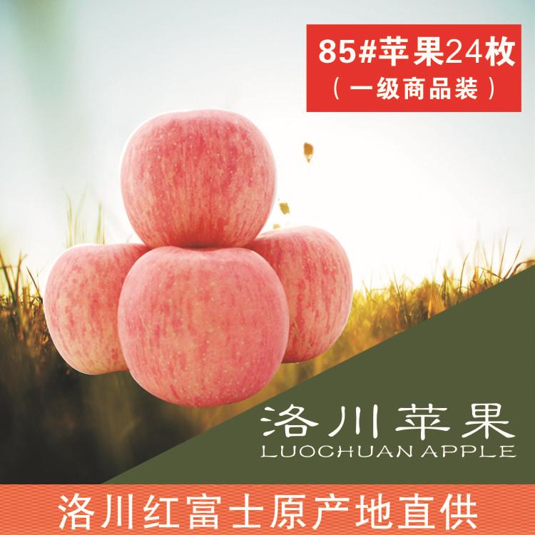 陕西红富士苹果新鲜水果洛川苹果原产地批发85#24枚一件代发