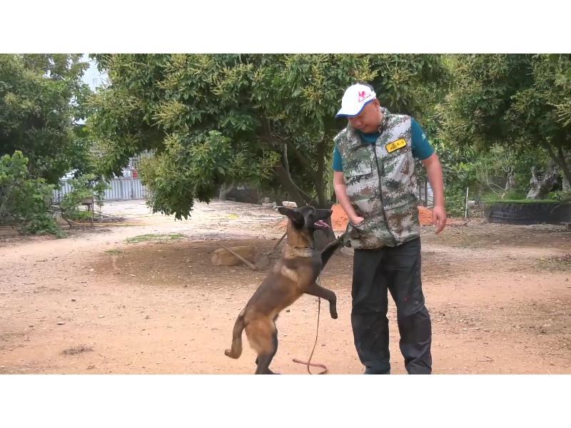泉州地区优质的训犬培训,漳州训犬
