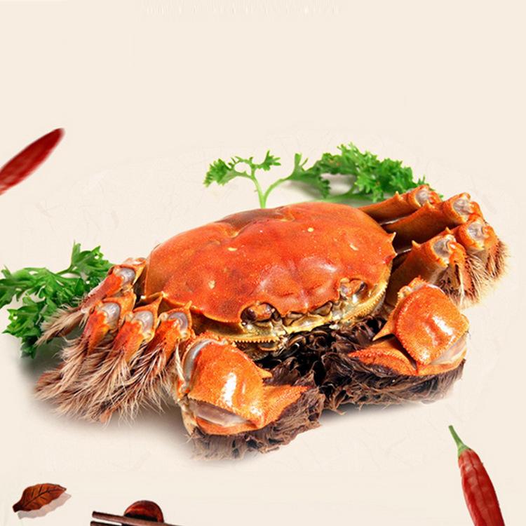 香辣蟹 洪泽湖大闸蟹 厂家直销 多肉膏黄 螃蟹鲜活现货 量大从优1