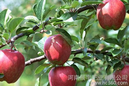 供应惠翔苹果果树用肥