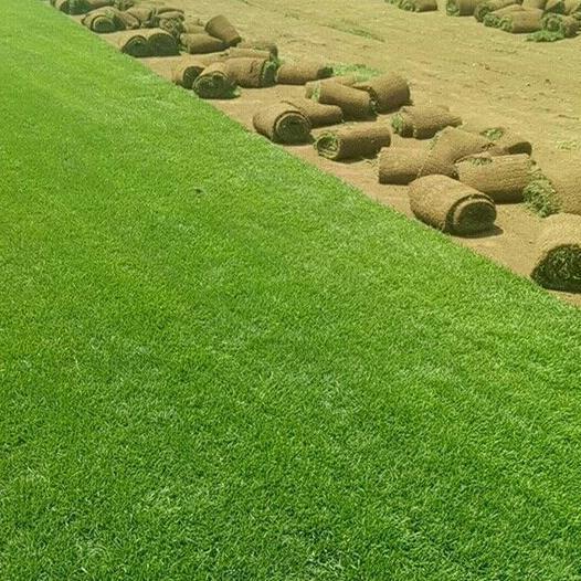 供应 草坪批发新鲜真草坪 小区绿化公园绿化天然草坪 带土量大从优