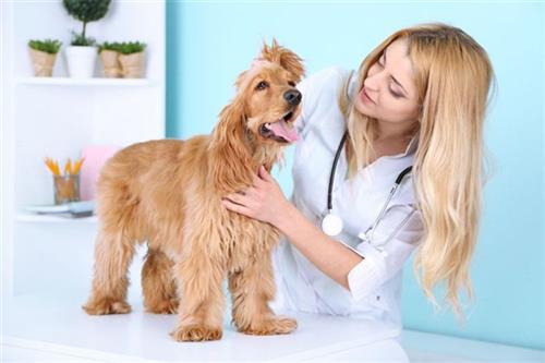 宠物美容、贝贝宠物俱乐部(图)、西安专业宠物美容