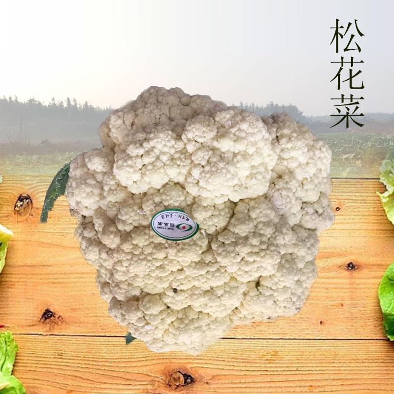 松花菜种子有机花菜青梗花椰菜菜花秋季四季播