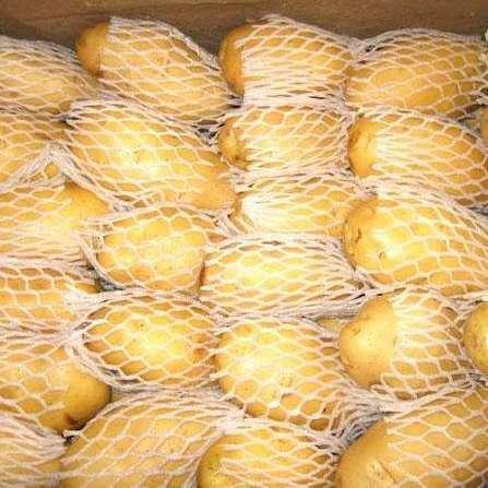 大量广西鲜薯三两以上水洗纸箱包装薯预售中