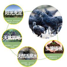略阳乌鸡生态乌鸡 林间散养土鸡 健康滋补 乌鸡批发 产地直供量大从优 母鸡