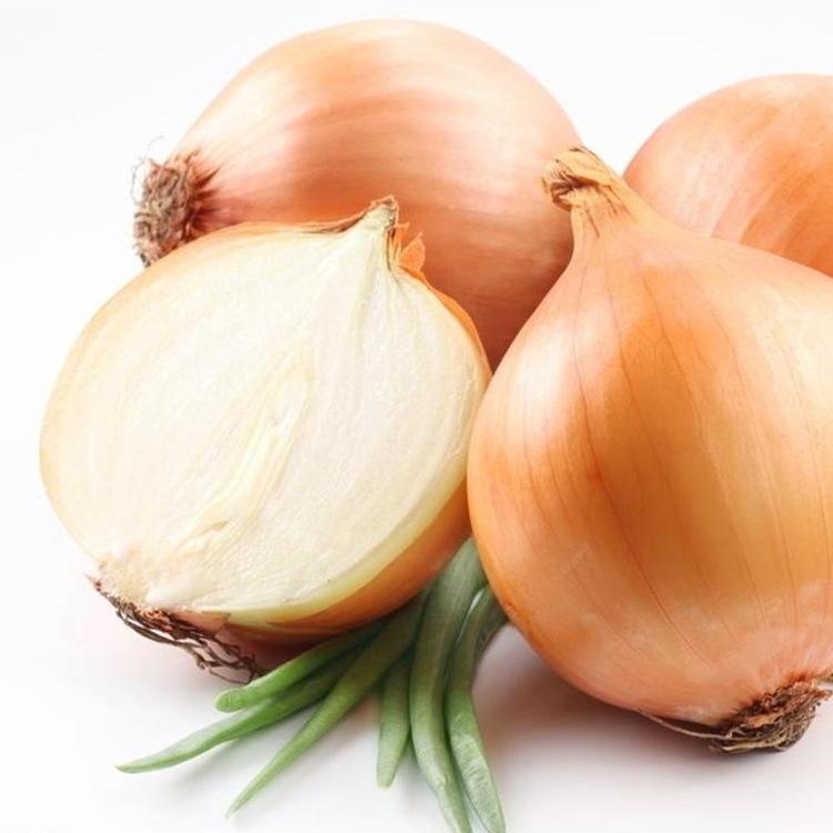 出口级紫皮洋葱 新鲜蔬菜农产品红皮圆葱头代存