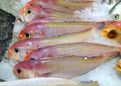 【频道精选】常吃鱼肉好处多,但营养师却说:这3种鱼一口都不能多吃!