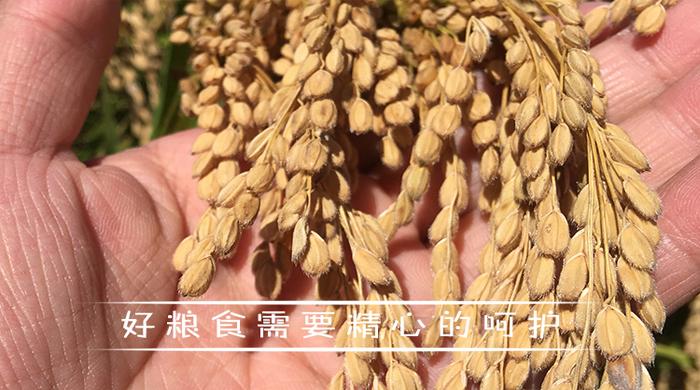 惠水县雅香农业农业发展有限公司