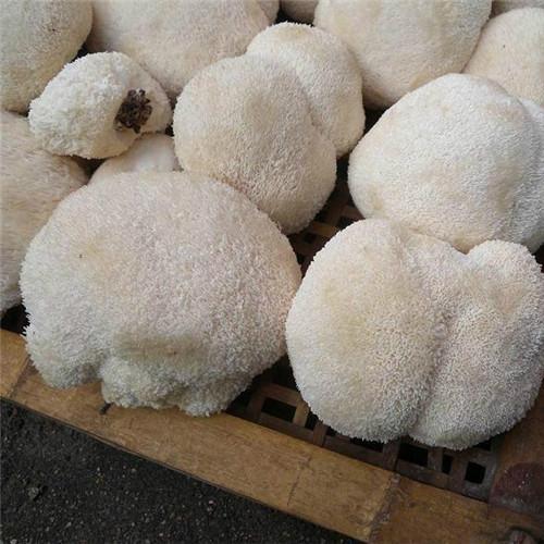 富硒鲜纯猴头菇天然绿色养胃