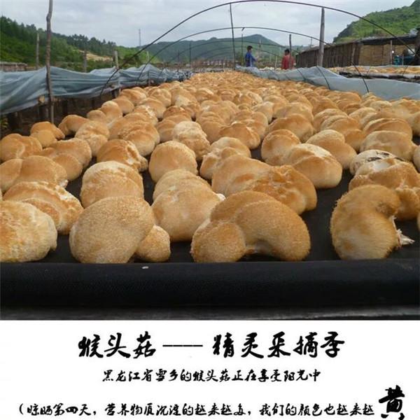 纯天然农家自种富硒养胃猴头菇