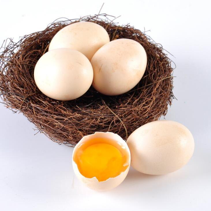 供应 农家树林散养五黑鸡土鸡蛋原生态黄壳土鸡蛋批发