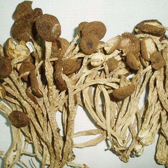 广昌特产干茶树菇