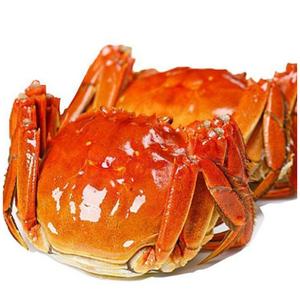 供应 阳澄湖大闸蟹 螃蟹礼盒装大闸蟹 现场捕捞
