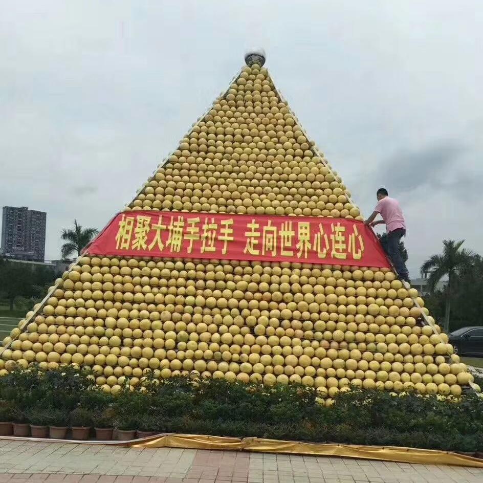 果农原产地直批大量蜜柚红心柚文旦柚