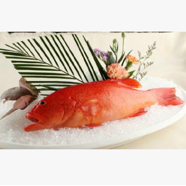 供应 生鲜生冻东星斑鱼500g条