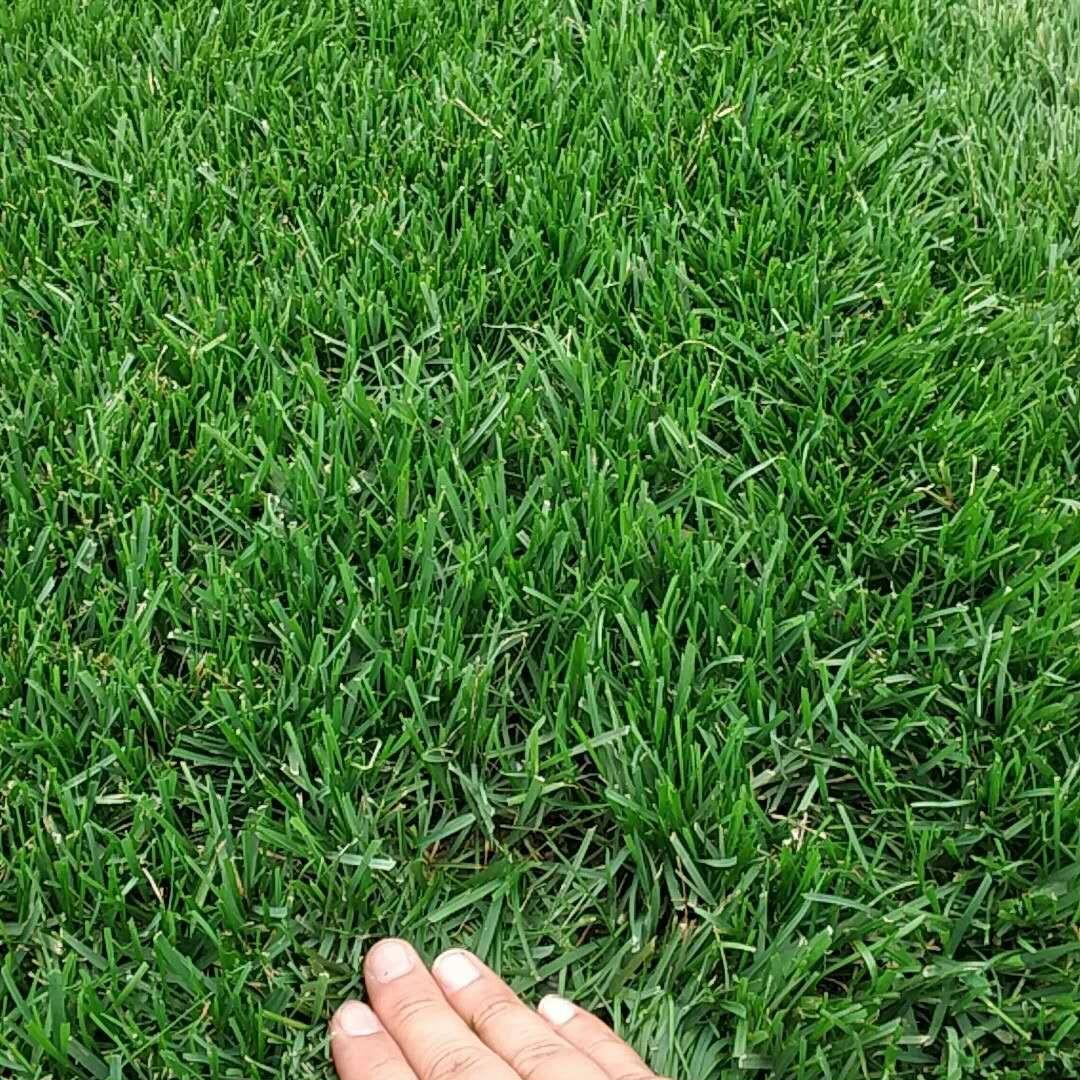 假草坪批发_假草坪哪家好_北京假草坪批发