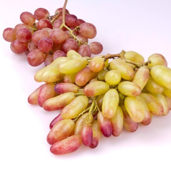 贵州绥阳金色阳光 美人指葡萄 新鲜水果 现摘现发 葡萄品种齐全