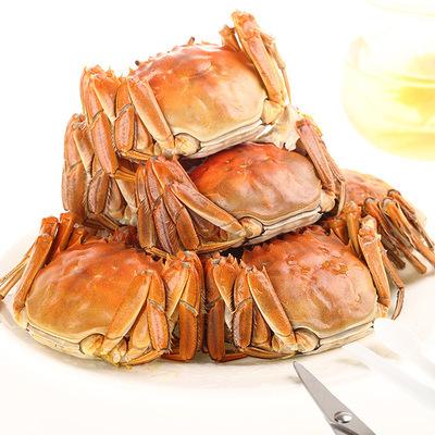 供应 阳澄湖大闸蟹高端礼盒一件代发12只装螃蟹