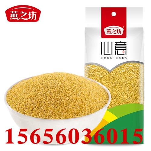 厂家批发黄小米 黄金苗黄小米价格 黄小米