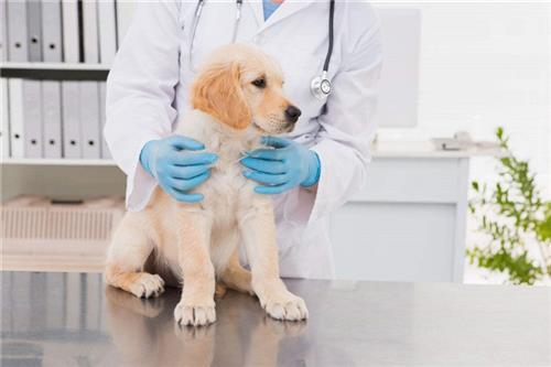 24小时宠物医院_宠物医院_贝贝宠物俱乐部