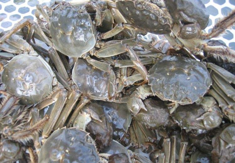 如何让螃蟹越冬